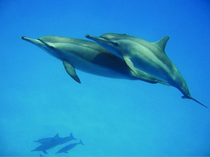 to be travel viaggi snorkelling with dolphins
